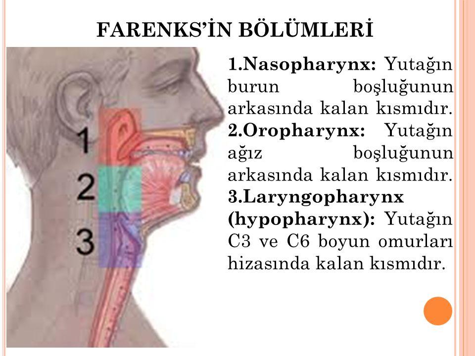 FARENKS'İN BÖLÜMLERİ 1.Nasopharynx: Yutağın burun boşluğunun arkasında kalan kısmıdır. 2.Oropharynx: Yutağın ağız boşluğunun arkasında kalan kısmıdır.