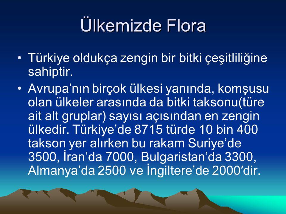 Ülkemizde Flora Türkiye oldukça zengin bir bitki çeşitliliğine sahiptir.