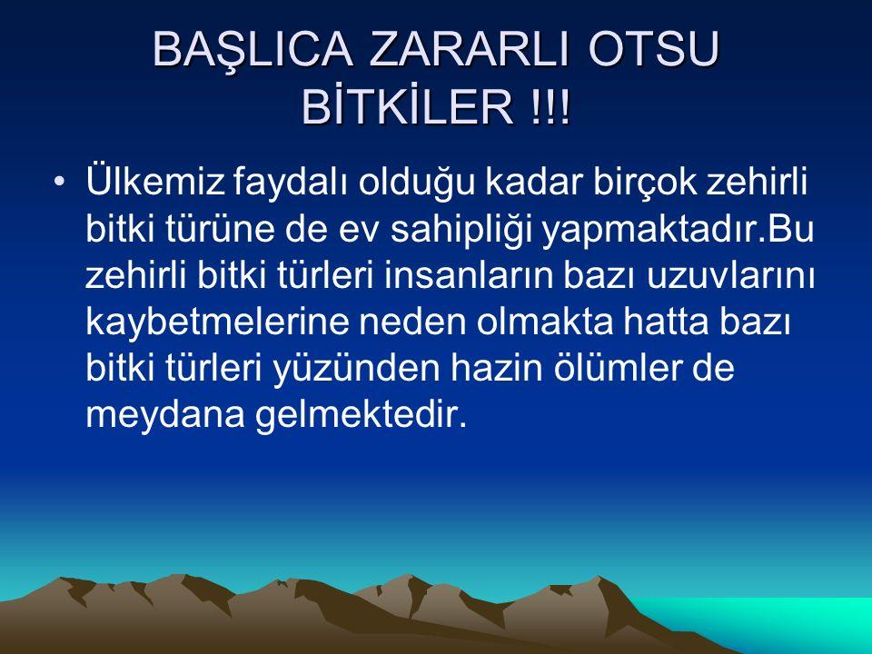 BAŞLICA ZARARLI OTSU BİTKİLER !!.