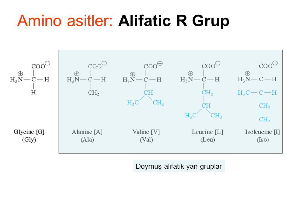 Amino asitler: Alifatic R Grup Doymuş alifatik yan gruplar
