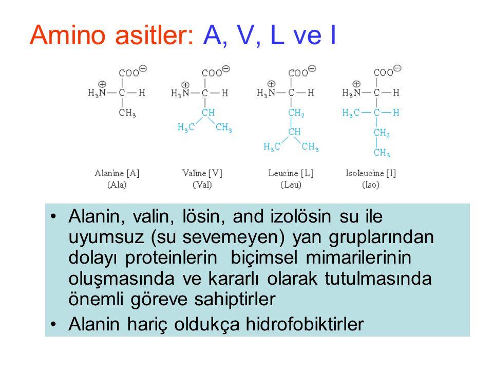 Alanin, valin, lösin, and izolösin su ile uyumsuz (su sevemeyen) yan gruplarından dolayı proteinlerin biçimsel mimarilerinin oluşmasında ve kararlı olarak tutulmasında önemli göreve sahiptirler Alanin hariç oldukça hidrofobiktirler Amino asitler: A, V, L ve I
