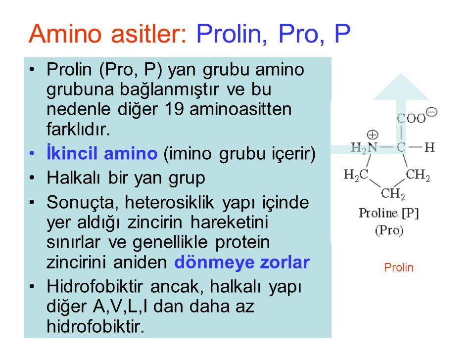Prolin (Pro, P) yan grubu amino grubuna bağlanmıştır ve bu nedenle diğer 19 aminoasitten farklıdır.
