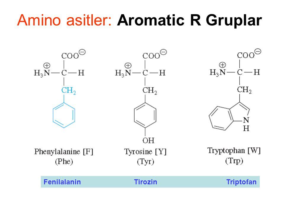 Amino asitler: Aromatic R Gruplar Fenilalanin Tirozin Triptofan
