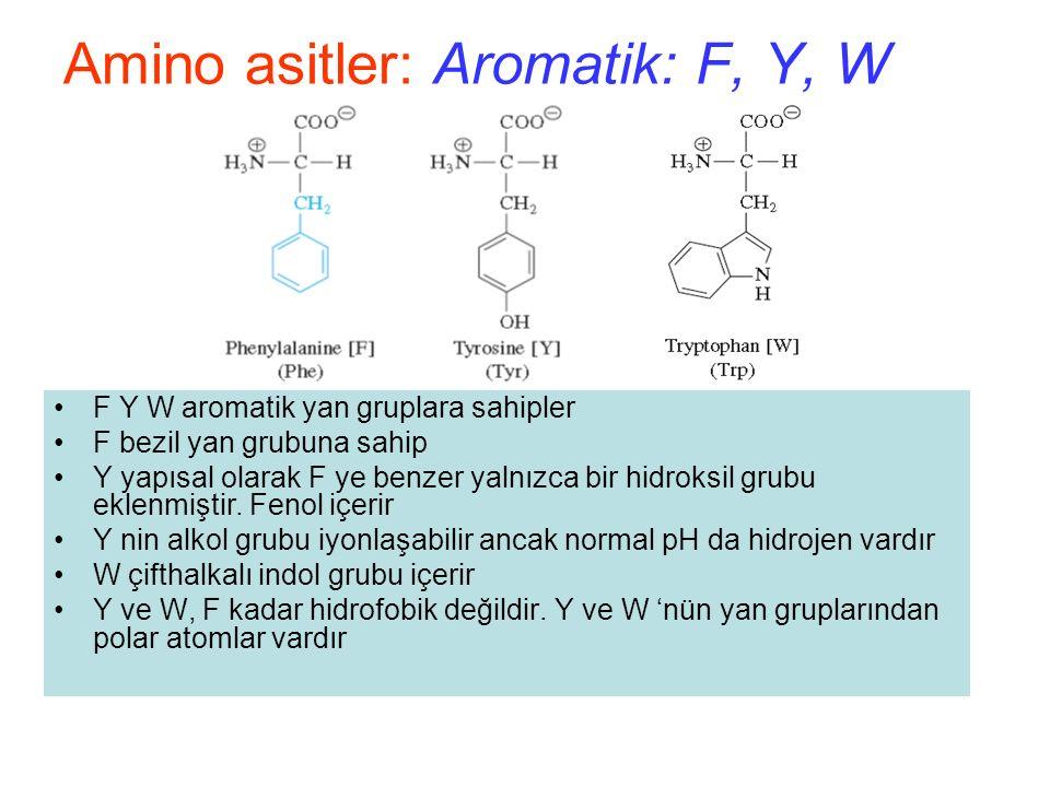 Amino asitler: Aromatik: F, Y, W F Y W aromatik yan gruplara sahipler F bezil yan grubuna sahip Y yapısal olarak F ye benzer yalnızca bir hidroksil grubu eklenmiştir.
