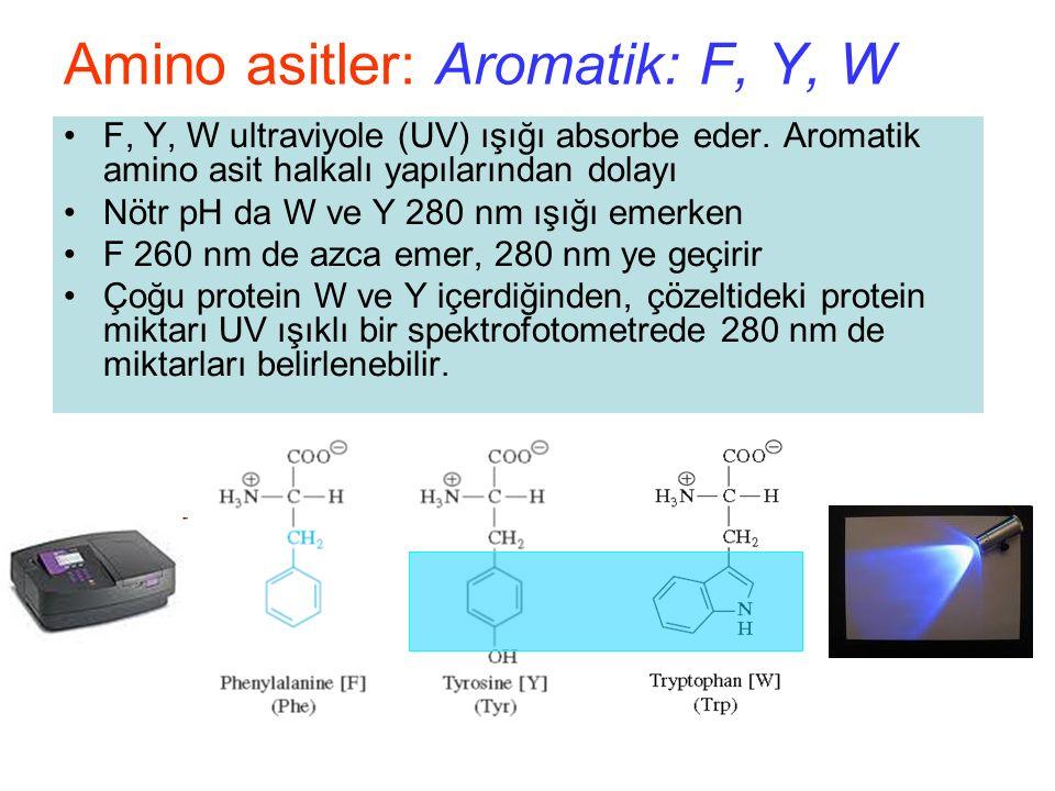 F, Y, W ultraviyole (UV) ışığı absorbe eder.