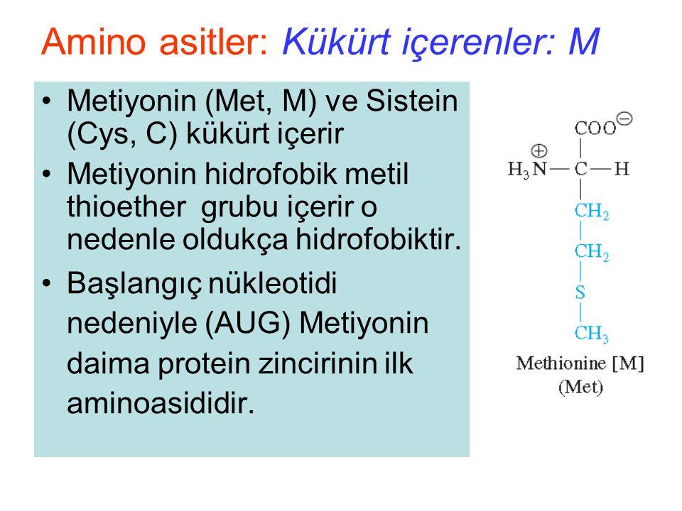 Metiyonin (Met, M) ve Sistein (Cys, C) kükürt içerir Metiyonin hidrofobik metil thioether grubu içerir o nedenle oldukça hidrofobiktir.