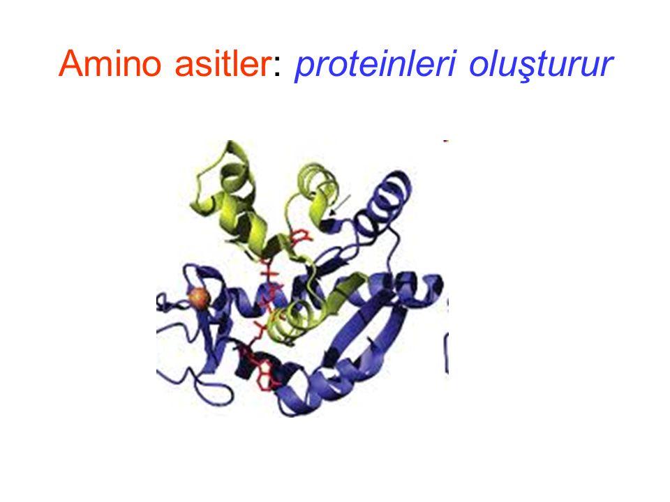 Amino asitler: Hidrofobiklik Hidrofobik Az Hidrofobik Hidrofilik