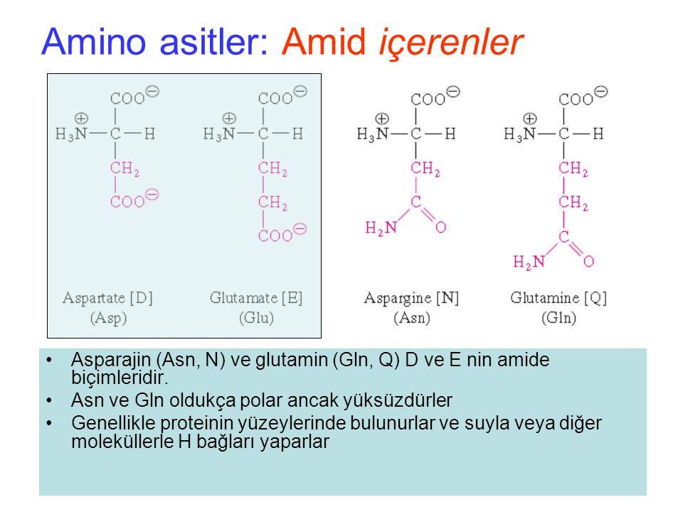 Amino asitler: Amid içerenler Asparajin (Asn, N) ve glutamin (Gln, Q) D ve E nin amide biçimleridir.