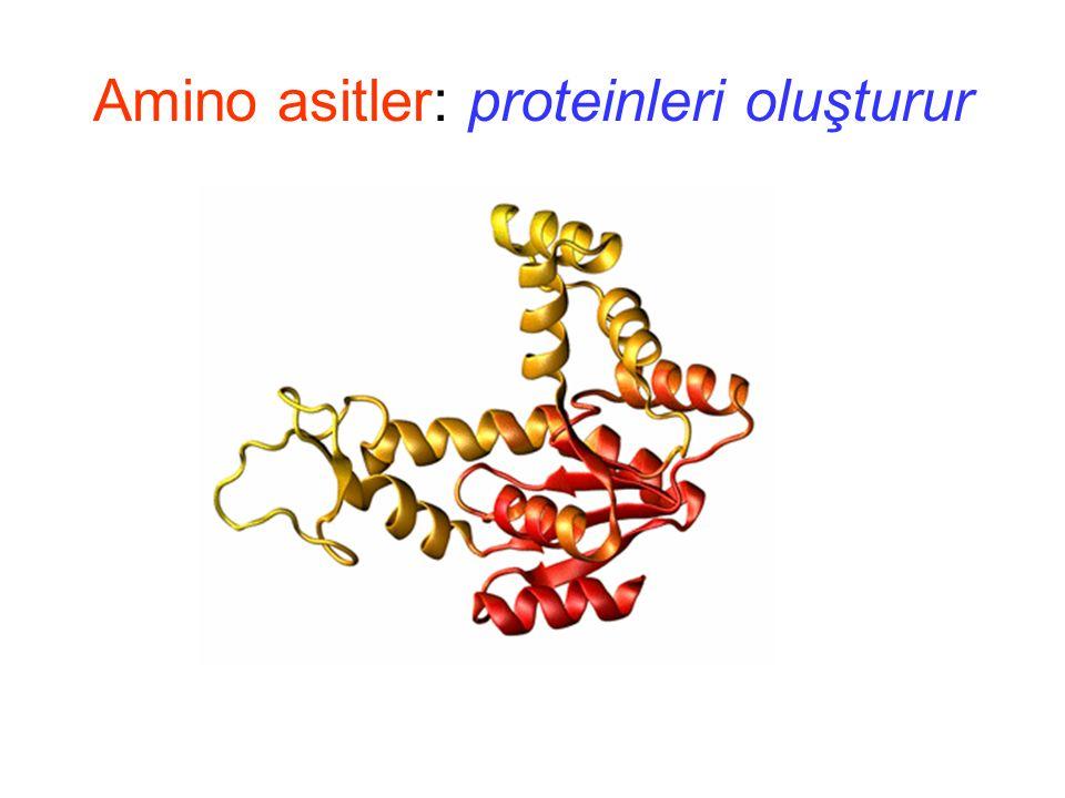 Amino asitler: Peptid bağ oluşumu - -pH 5 de ~ net +2 yüklüdür - + + + +