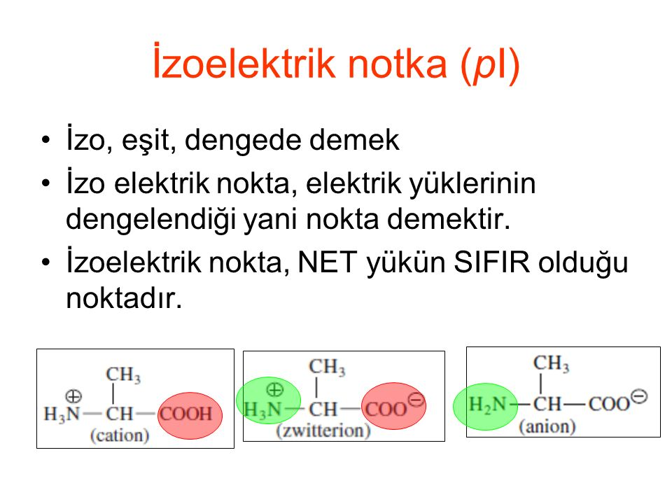 İzoelektrik notka (pI) İzo, eşit, dengede demek İzo elektrik nokta, elektrik yüklerinin dengelendiği yani nokta demektir.