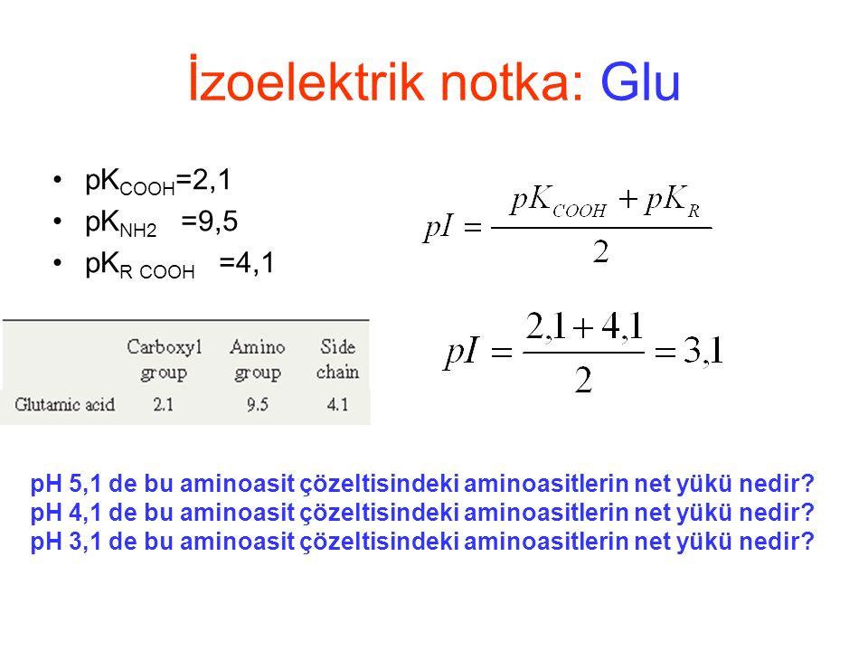 pK COOH =2,1 pK NH2 =9,5 pK R COOH =4,1 İzoelektrik notka: Glu pH 5,1 de bu aminoasit çözeltisindeki aminoasitlerin net yükü nedir.