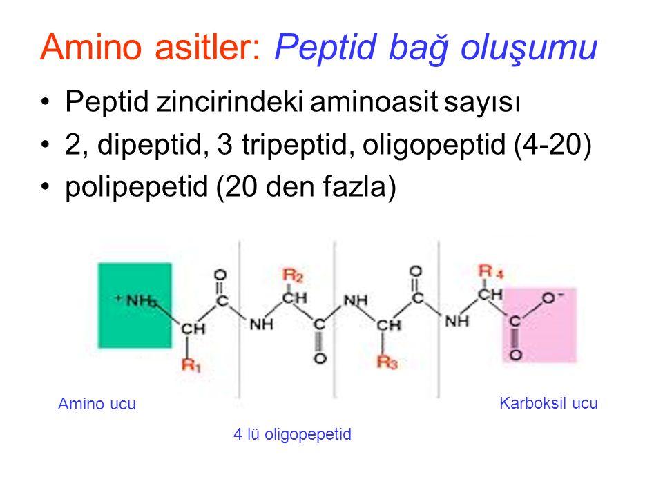 Peptid zincirindeki aminoasit sayısı 2, dipeptid, 3 tripeptid, oligopeptid (4-20) polipepetid (20 den fazla) Amino asitler: Peptid bağ oluşumu Amino ucu Karboksil ucu 4 lü oligopepetid