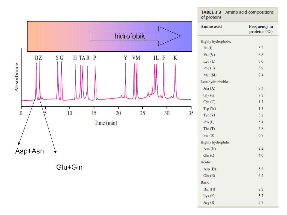 Asp+Asn Glu+Gln hidrofobik