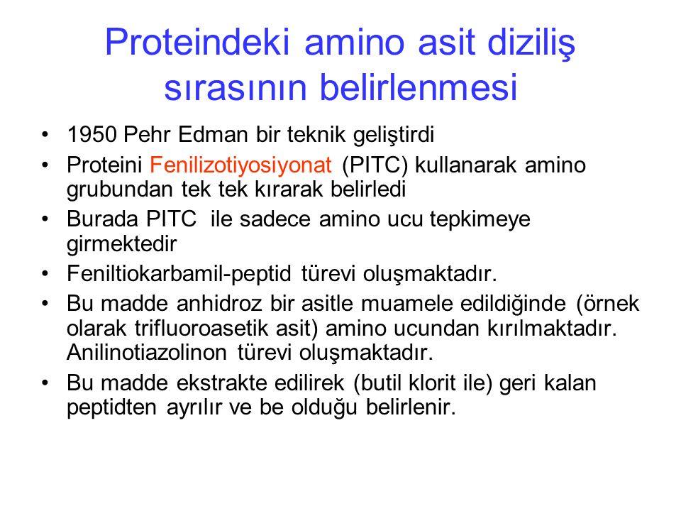 Proteindeki amino asit diziliş sırasının belirlenmesi 1950 Pehr Edman bir teknik geliştirdi Proteini Fenilizotiyosiyonat (PITC) kullanarak amino grubundan tek tek kırarak belirledi Burada PITC ile sadece amino ucu tepkimeye girmektedir Feniltiokarbamil-peptid türevi oluşmaktadır.
