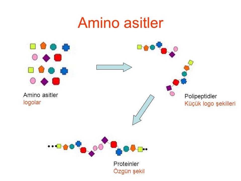 Amino asitler: Alkol (-OH) içerenler Serin (Ser, S) and treonin (Thr, T) polar alkol yan grubuna sahiptirler S ve T nin -OH grupları zayıf asidik özellik gösterir