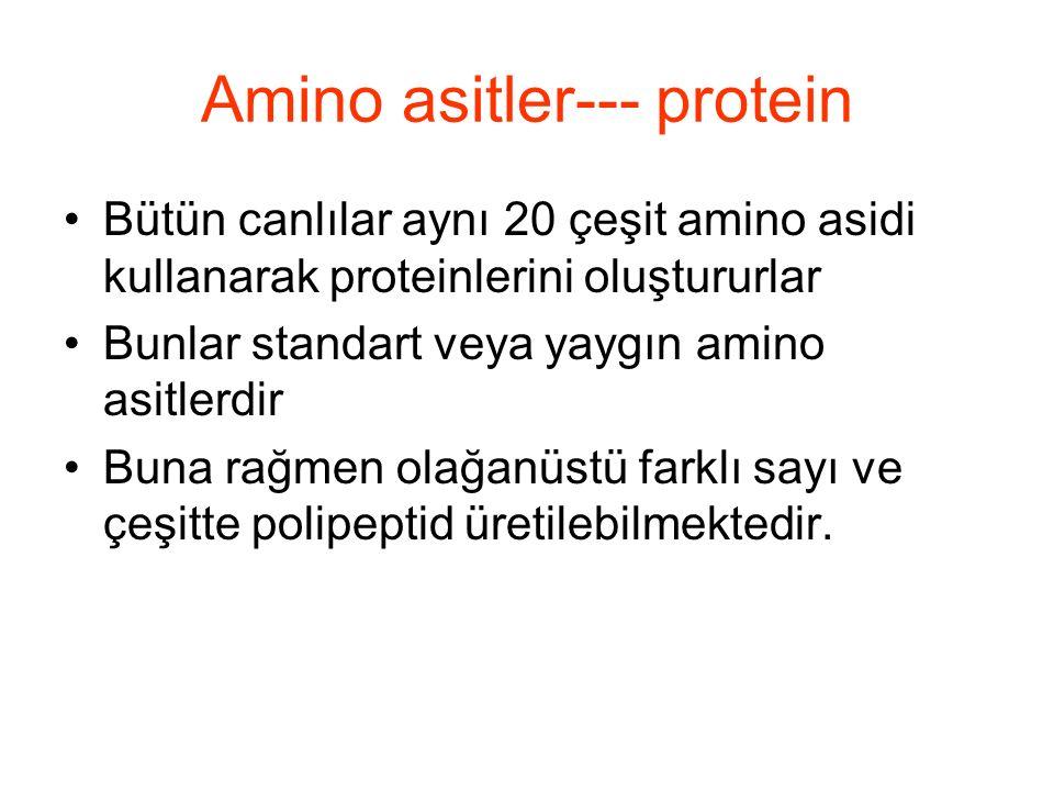 Amino asitler: Bazik NH x + içerenler Histidin (His, H), lisin (Lys, K), ve Arginine (Arg, R) hidrofilik bazik AZOT yan gruba sahiptir.