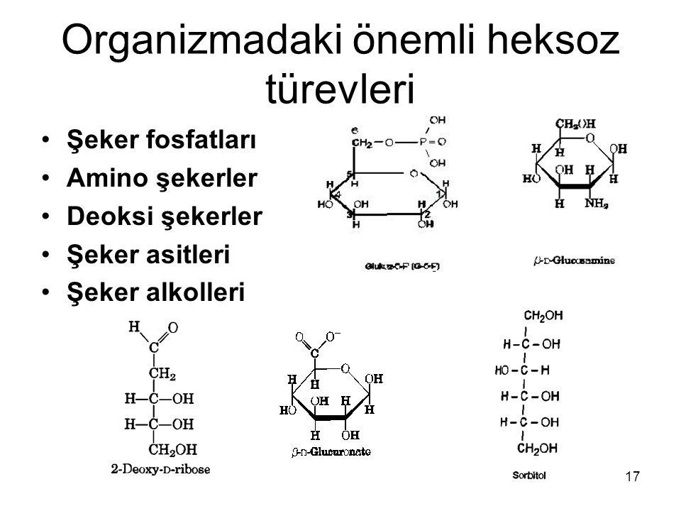 17 Organizmadaki önemli heksoz türevleri Şeker fosfatları Amino şekerler Deoksi şekerler Şeker asitleri Şeker alkolleri
