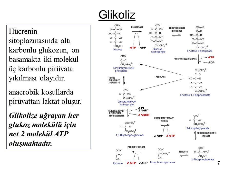 27 Glikoliz Hücrenin sitoplazmasında altı karbonlu glukozun, on basamakta iki molekül üç karbonlu pirüvata yıkılması olayıdır.