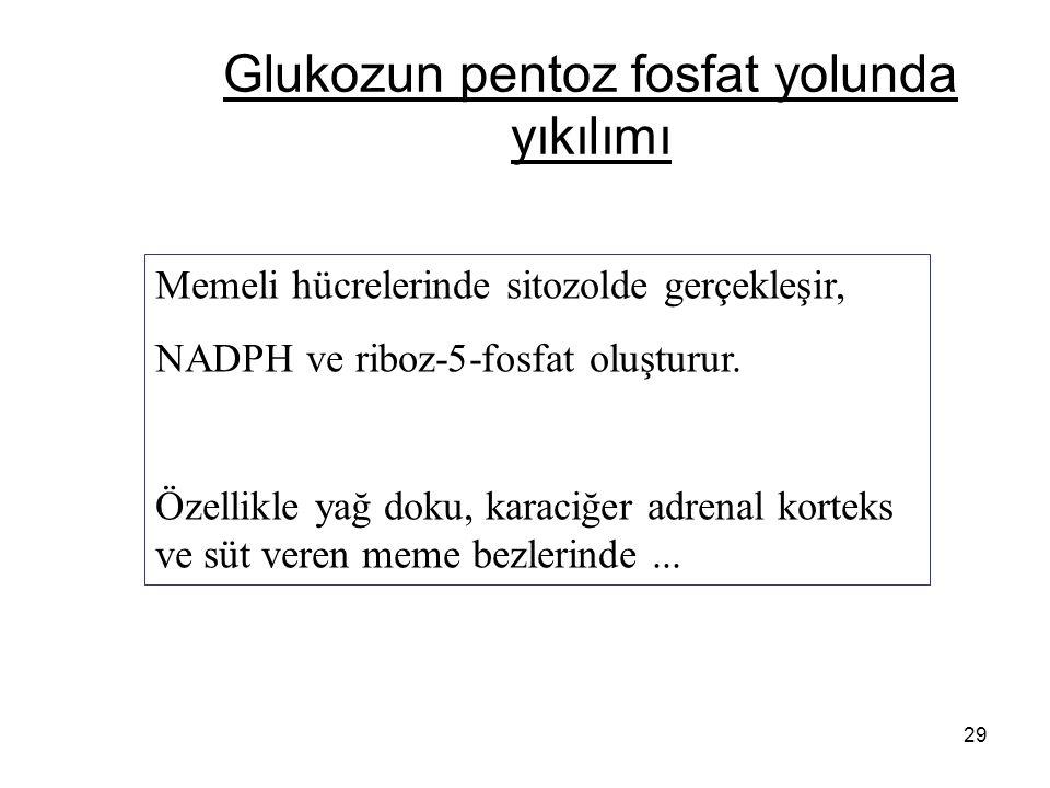 29 Glukozun pentoz fosfat yolunda yıkılımı Memeli hücrelerinde sitozolde gerçekleşir, NADPH ve riboz-5-fosfat oluşturur.