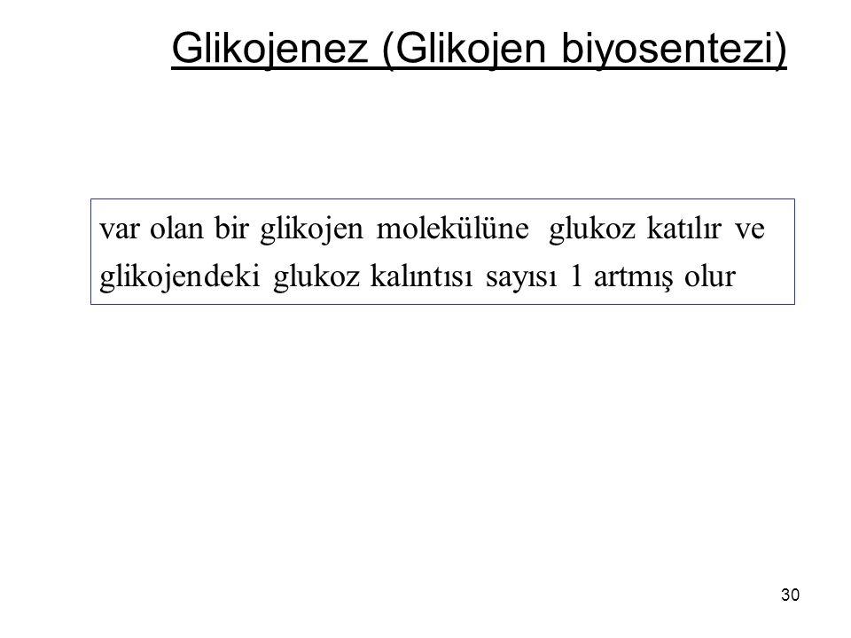 30 Glikojenez (Glikojen biyosentezi) var olan bir glikojen molekülüne glukoz katılır ve glikojendeki glukoz kalıntısı sayısı 1 artmış olur
