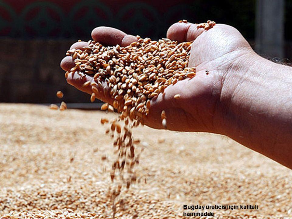 4 Buğday üreticisi için kaliteli hammadde