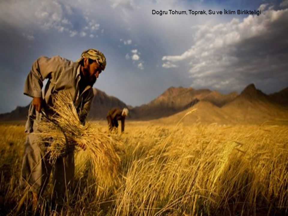 6 Buğday üreticisi için son ürüne ulaşmak demektir.