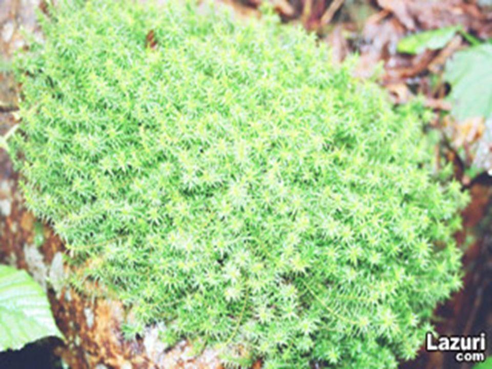 KÖK ve GÖVDE 1-KÖK: 1-KÖK: Bitkileri toprağa bağlayan ve topraktan su ve mineral maddelerin alımını sağlayan organıdır.