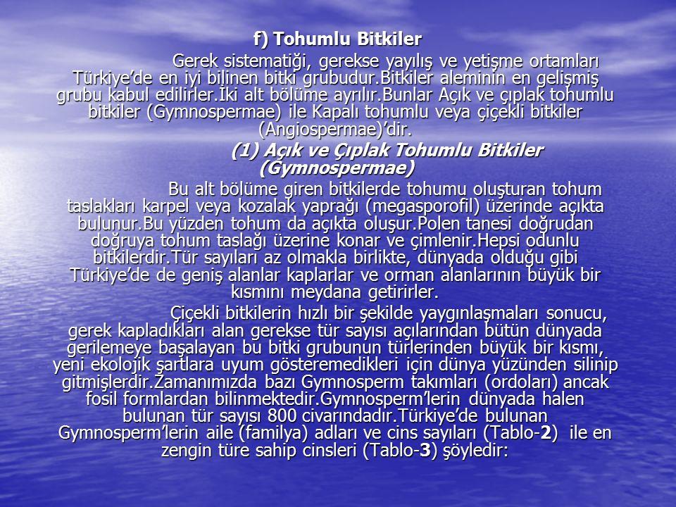 f) Tohumlu Bitkiler f) Tohumlu Bitkiler Gerek sistematiği, gerekse yayılış ve yetişme ortamları Türkiye'de en iyi bilinen bitki grubudur.Bitkiler alem