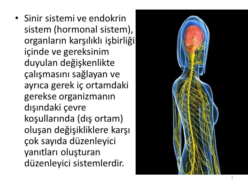 Sinir sistemi ve endokrin sistem (hormonal sistem), organların karşılıklı işbirliği içinde ve gereksinim duyulan değişkenlikte çalışmasını sağlayan ve