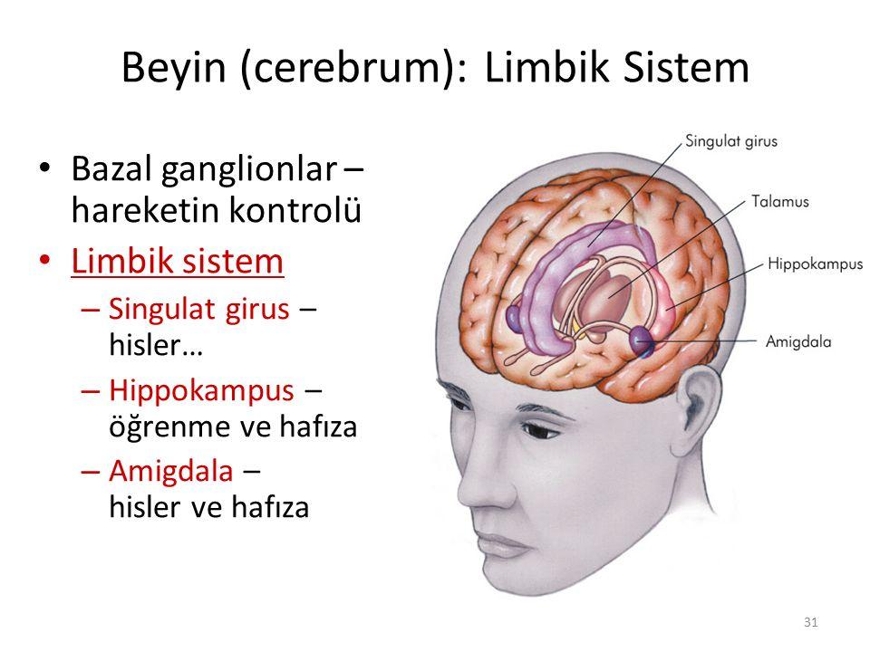 31 Bazal ganglionlar – hareketin kontrolü Limbik sistem – Singulat girus – hisler… – Hippokampus – öğrenme ve hafıza – Amigdala – hisler ve hafıza Bey
