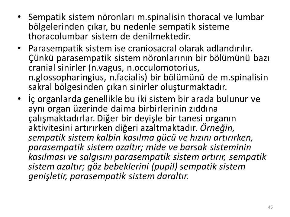 Sempatik sistem nöronları m.spinalisin thoracal ve lumbar bölgelerinden çıkar, bu nedenle sempatik sisteme thoracolumbar sistem de denilmektedir. Para