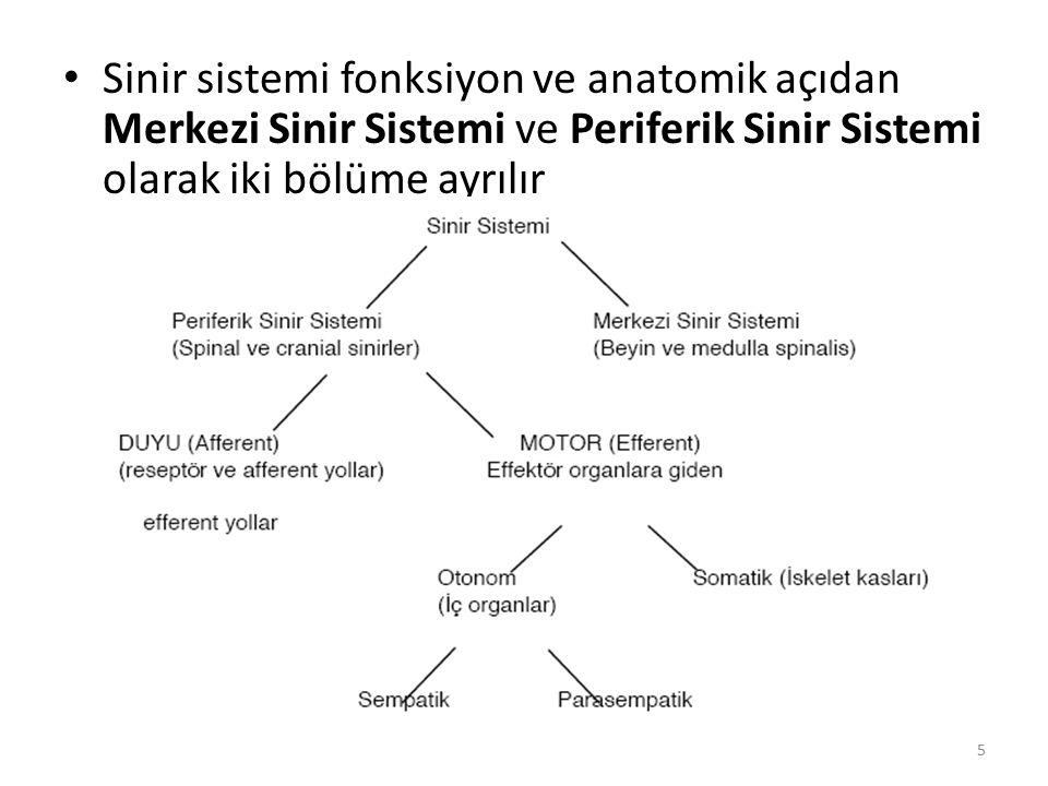 Sinir sistemi fonksiyon ve anatomik açıdan Merkezi Sinir Sistemi ve Periferik Sinir Sistemi olarak iki bölüme ayrılır 5