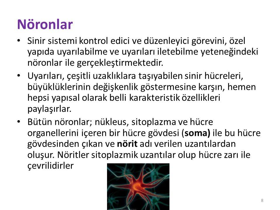 Nöritler, uyarıyı taşıdıkları yöne bağlı olarak akson ve dendrit olmak üzere ikiye ayrılırlar.