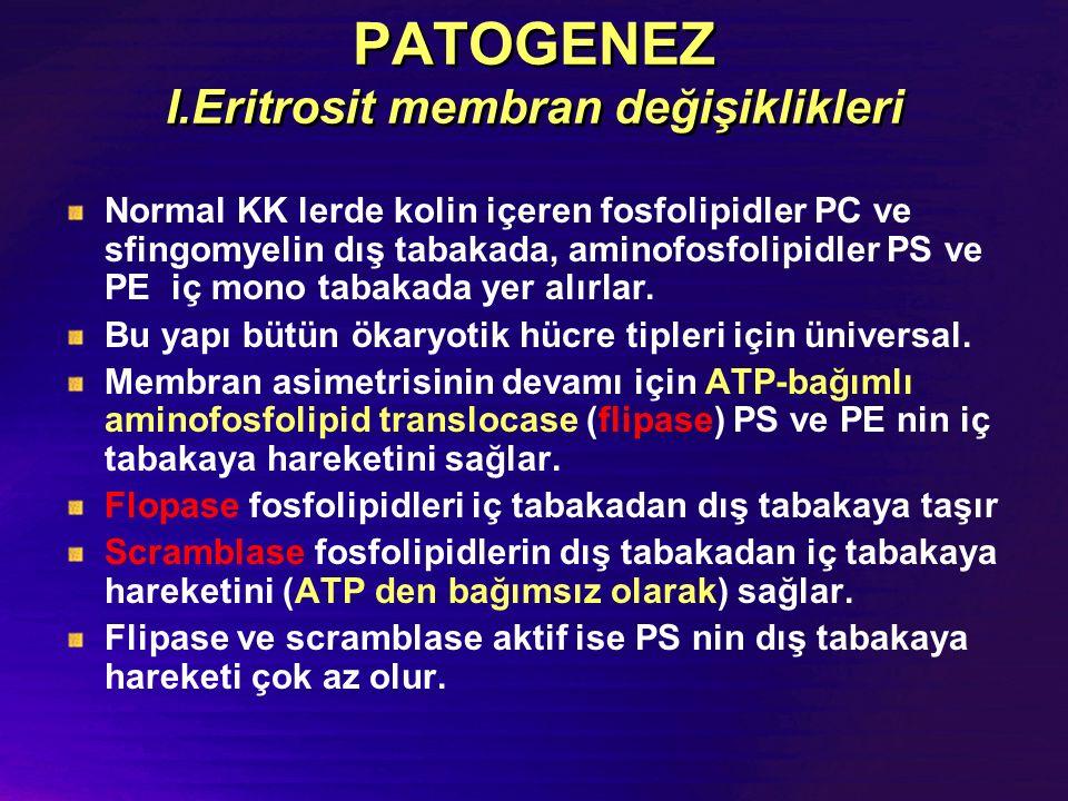 PATOGENEZ I.Eritrosit membran değişiklikleri Normal KK lerde kolin içeren fosfolipidler PC ve sfingomyelin dış tabakada, aminofosfolipidler PS ve PE iç mono tabakada yer alırlar.