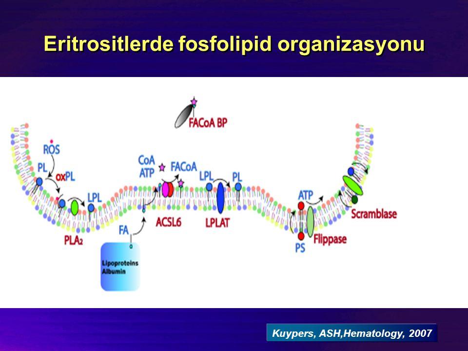 Eritrositlerde fosfolipid organizasyonu Kuypers, ASH,Hematology, 2007