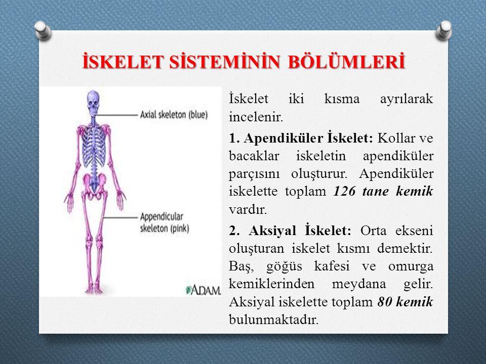 İSKELET SİSTEMİNİN BÖLÜMLERİ İskelet iki kısma ayrılarak incelenir. 1. Apendiküler İskelet: Kollar ve bacaklar iskeletin apendiküler parçısını oluştur