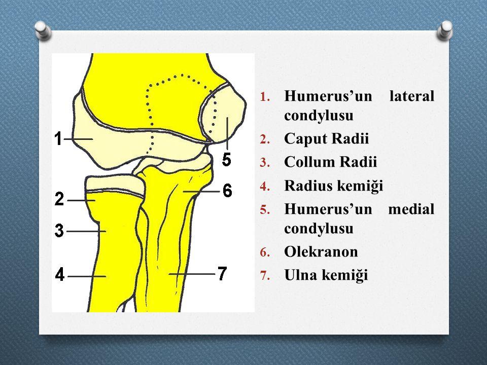 1. Humerus'un lateral condylusu 2. Caput Radii 3. Collum Radii 4. Radius kemiği 5. Humerus'un medial condylusu 6. Olekranon 7. Ulna kemiği