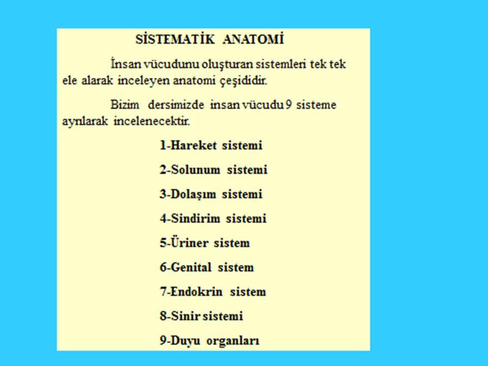 Apendiküler İskelet Sistemi Üst Ekstremite Kemikleri 1.