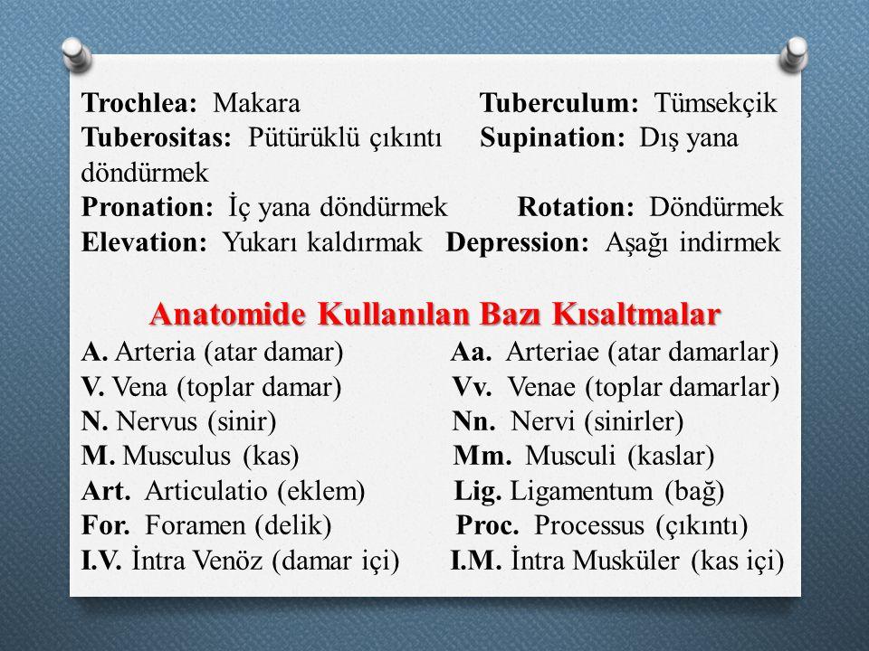 Trochlea: Makara Tuberculum: Tümsekçik Tuberositas: Pütürüklü çıkıntı Supination: Dış yana döndürmek Pronation: İç yana döndürmek Rotation: Döndürmek