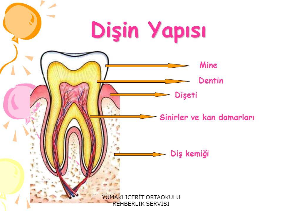Dişin Yapısı Dişin Yapısı Mine Dentin Dişeti Sinirler ve kan damarları Diş kemiği YUMAKLICERİT ORTAOKULU REHBERLİK SERVİSİ