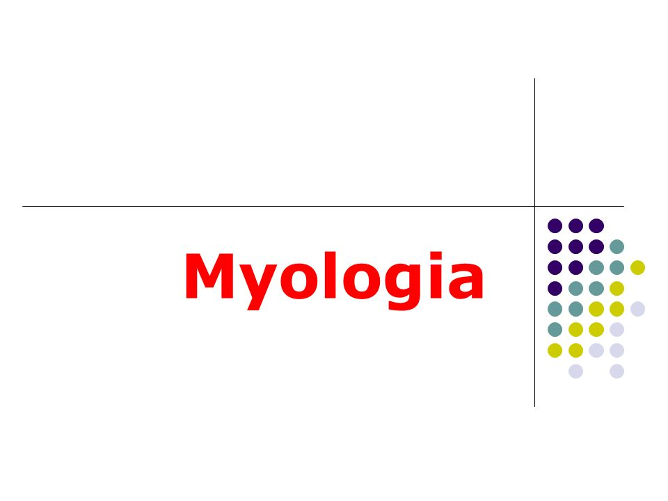 Myologia: kas bilimi Musculus ( m. ): kas Musculi ( Mm. ) : kaslar Musculorum: kasa ait