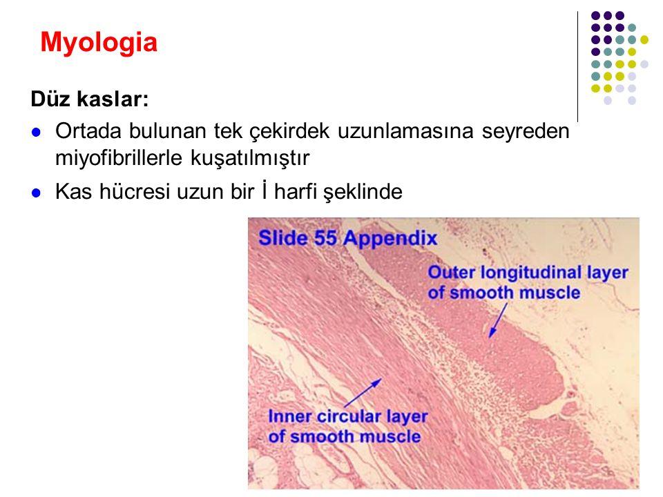 Myologia Düz kaslar: Genellikle damarların veya içi boş organlarımızın duvarlarında Çoğu zaman isteğimiz dışında görev yaparlar Otonom sinir sistemi tarafından yönetilirler Yavaş, ritmik ve otonom hareketler yaparlar Genellikle dalgalar şeklinde ilerleyen peristaltik hareketler