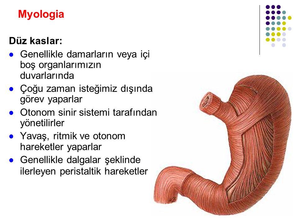 Myologia Kasların hareketleri: Sagittal eksende: Üsttan çaprazlarsa: Abduction Alttan çaprazlarsa: Adduction