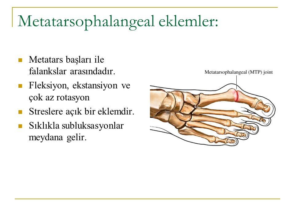 Metatarsophalangeal eklemler: Metatars başları ile falankslar arasındadır. Fleksiyon, ekstansiyon ve çok az rotasyon Streslere açık bir eklemdir. Sıkl