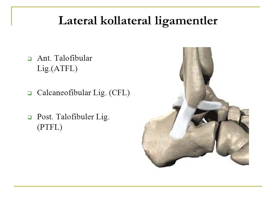  Ant. Talofibular Lig.(ATFL)  Calcaneofibular Lig. (CFL)  Post. Talofibuler Lig. (PTFL) Lateral kollateral ligamentler