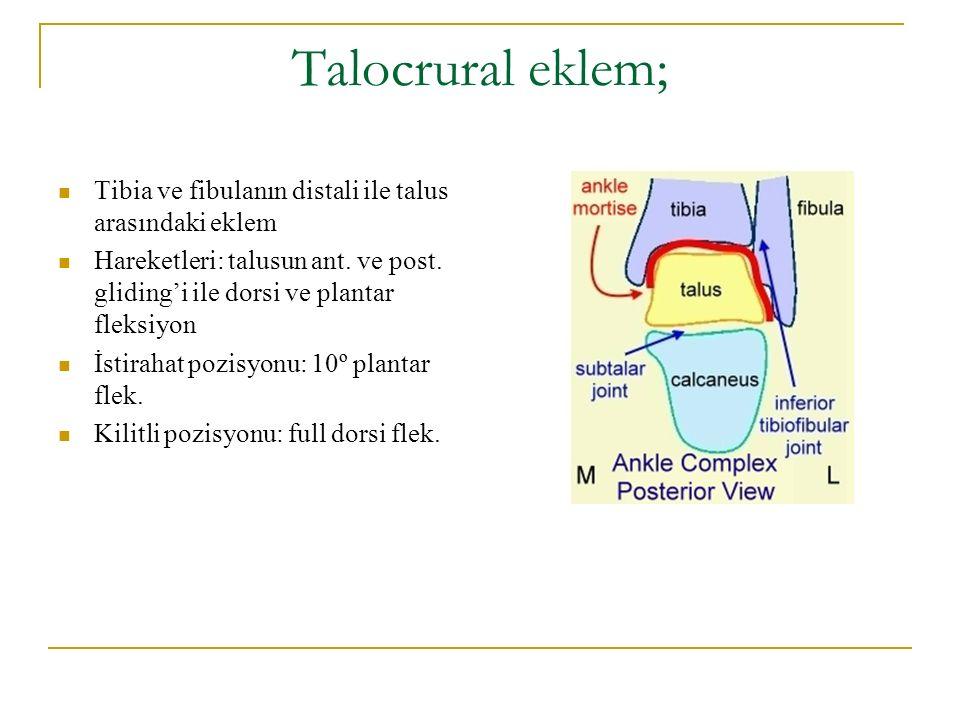 Talocrural eklem; Tibia ve fibulanın distali ile talus arasındaki eklem Hareketleri: talusun ant. ve post. gliding'i ile dorsi ve plantar fleksiyon İs