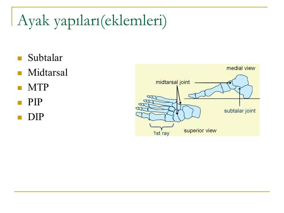 Ayak yapıları(eklemleri) Subtalar Midtarsal MTP PIP DIP