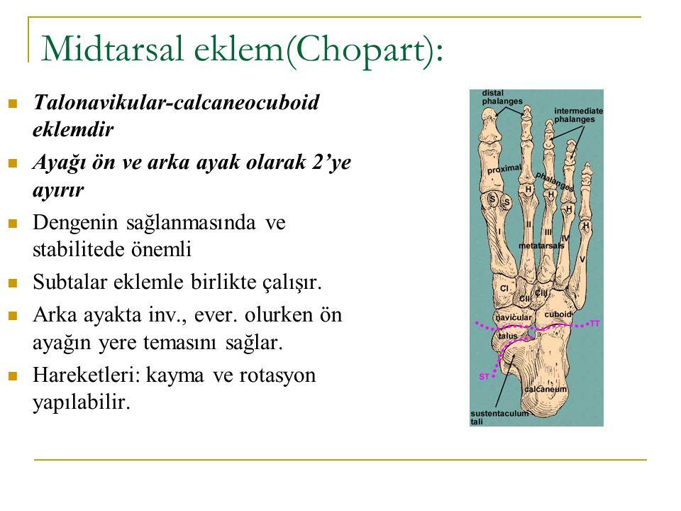 Midtarsal eklem(Chopart): Talonavikular-calcaneocuboid eklemdir Ayağı ön ve arka ayak olarak 2'ye ayırır Dengenin sağlanmasında ve stabilitede önemli
