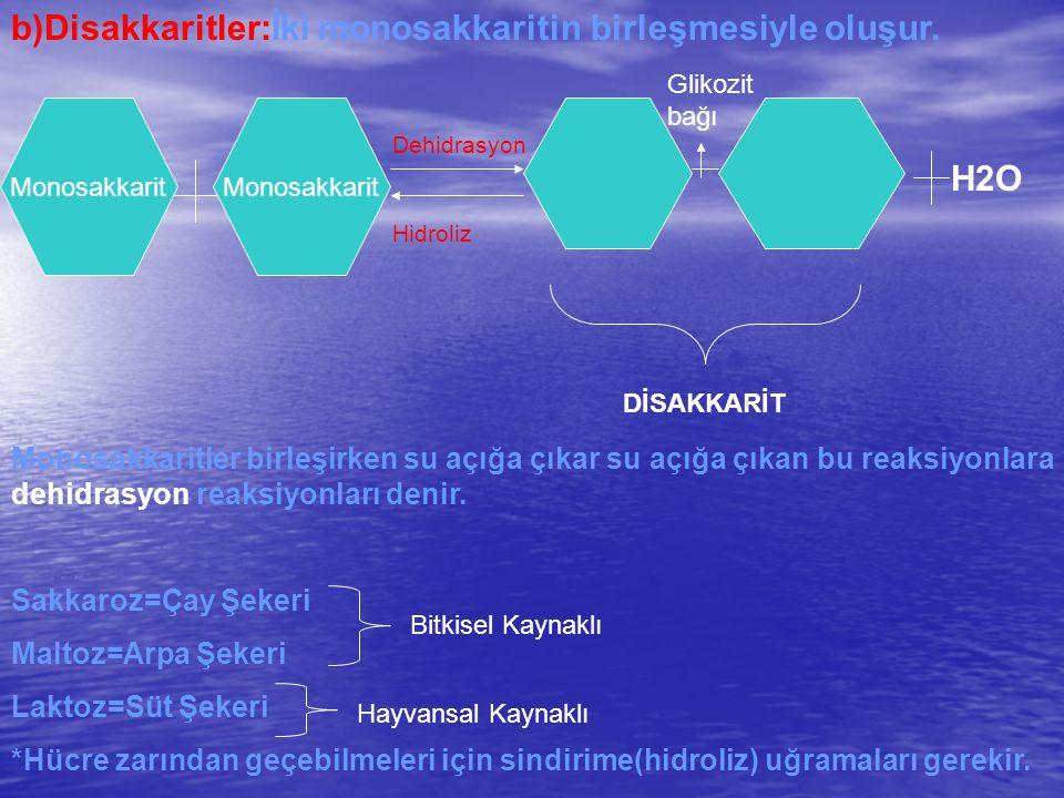 b)Disakkaritler:İki monosakkaritin birleşmesiyle oluşur. Dehidrasyon Hidroliz Monosakkarit Glikozit bağı DİSAKKARİT H2O Monosakkaritler birleşirken su