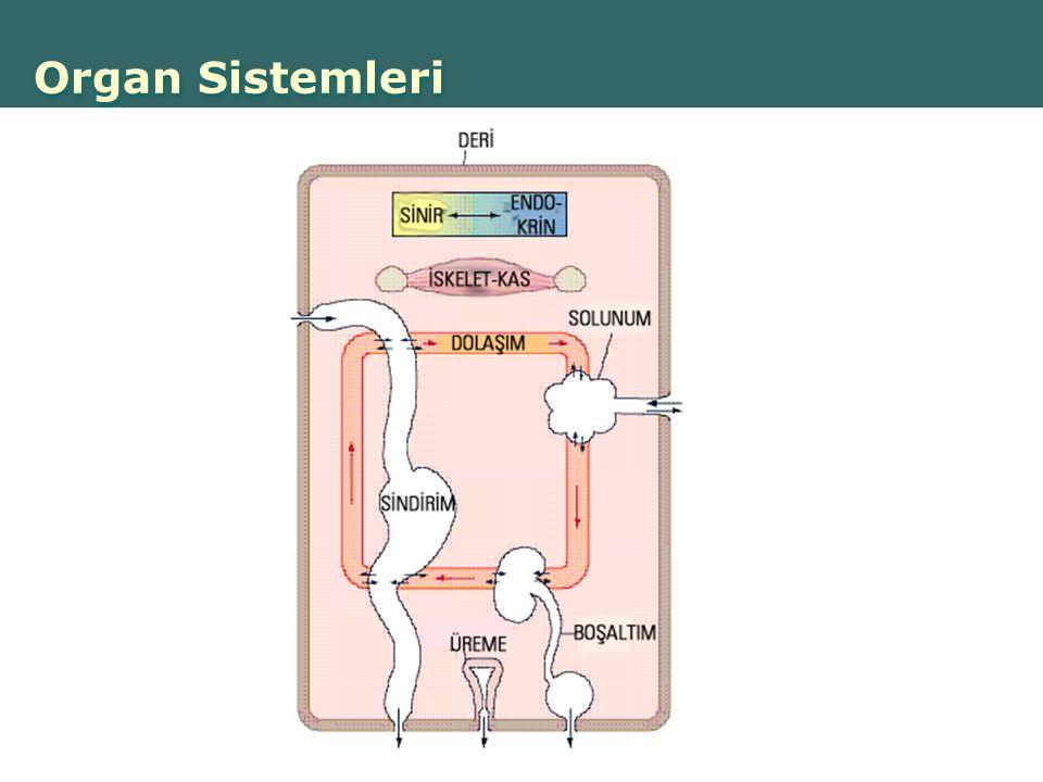 Copyright © 2004 Pearson Education, Inc., publishing as Benjamin Cummings Organ Sistemleri